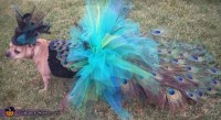 DIY Peacock Dog Costume