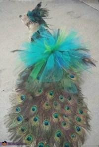 DIY Peacock Dog Costume - Photo 3/5