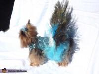 Homemade Peacock Dog Costume - Photo 2/3