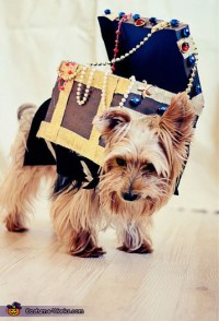 Pirate and Treasure Dogs Costume