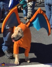 Pokemon Charizard Dog Costume
