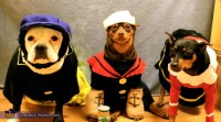Popeye, Olive Oyl and Brutus - Costumes for Dogs - Photo 2/5