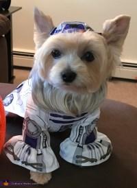 R2D2 Dog Costume