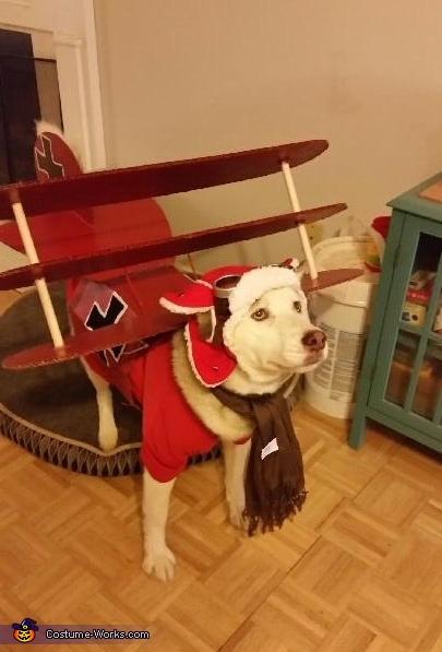 Red Baron Dog Costume