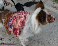 Homemade Roadkill Zombie Dog Costume - Photo 3/4