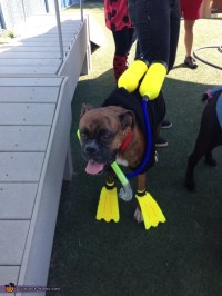 Scuba Diver - DIY Halloween Costume for Dogs - Photo 3/3