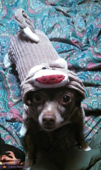 Sock Monkey Dog Costume - Photo 2/2