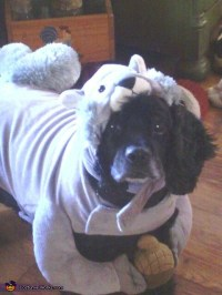 Squirrel Costume for Dogs