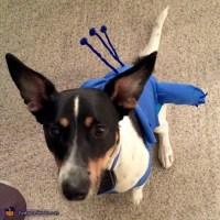 Stitch Dog Costume - Photo 2/5