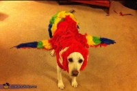 The Red Macaw Dog Costume