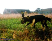 Homemade Umbreon Costume for Dogs - Photo 4/8