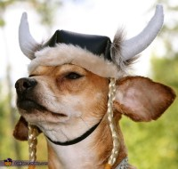 Viking - DIY Costume Ideas for Dogs - Photo 2/2