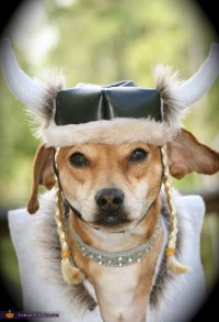 Viking - DIY Costume Ideas for Dogs
