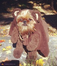 Homemade Ewok Costume for Dogs