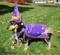 Weenie Witch Dog Costume