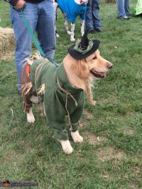 Wizard of Oz Scarecrow Dog Costume - Photo 4/4