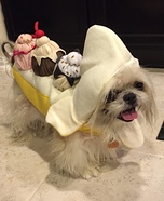 Homemade Costumes for Pets - Costume Works (page 7/50)