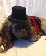 Homemade Costumes for Pets