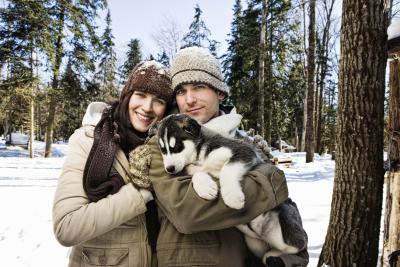 Unique Siberian Husky Dog Behaviors Pets