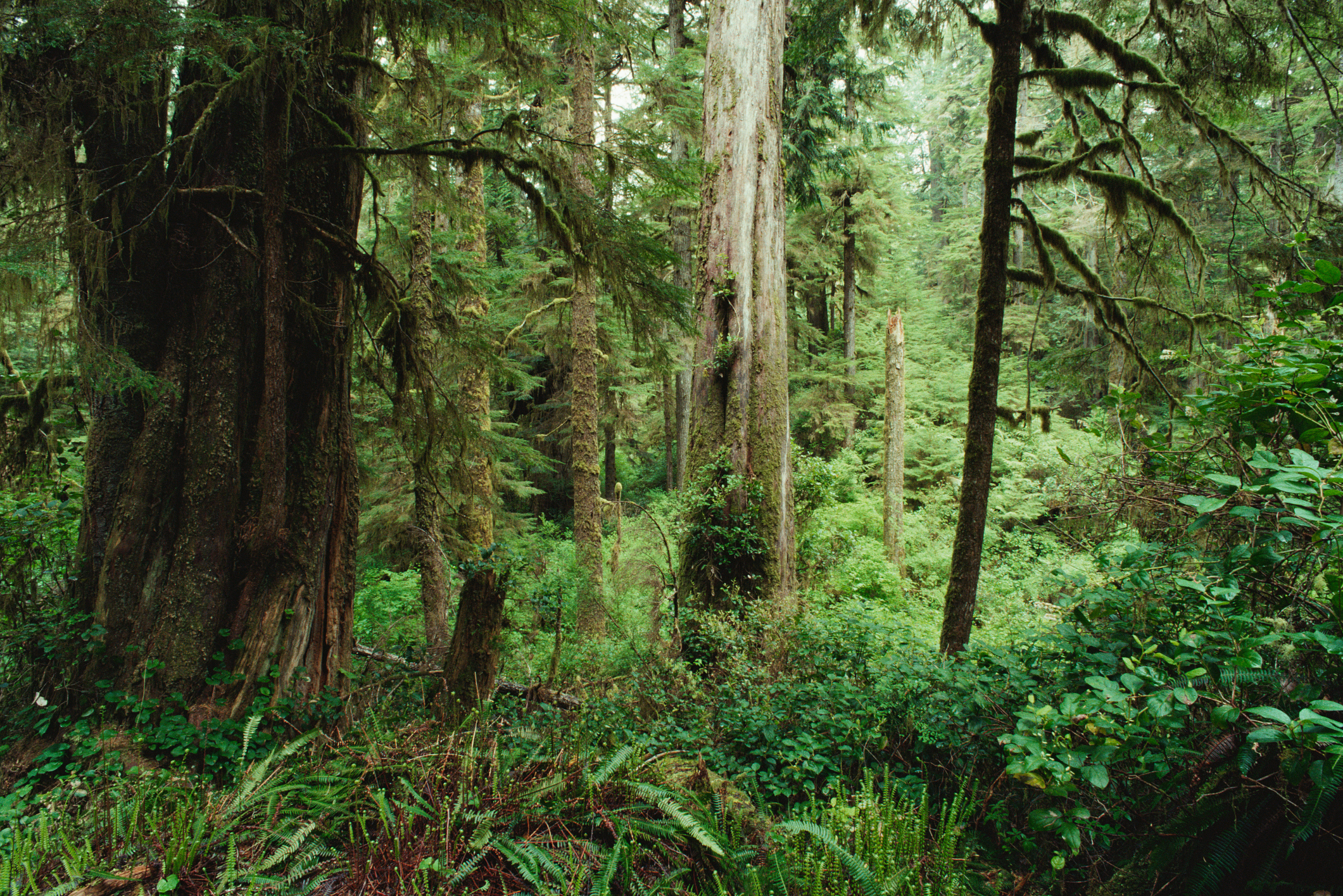Facts About Cedar Trees