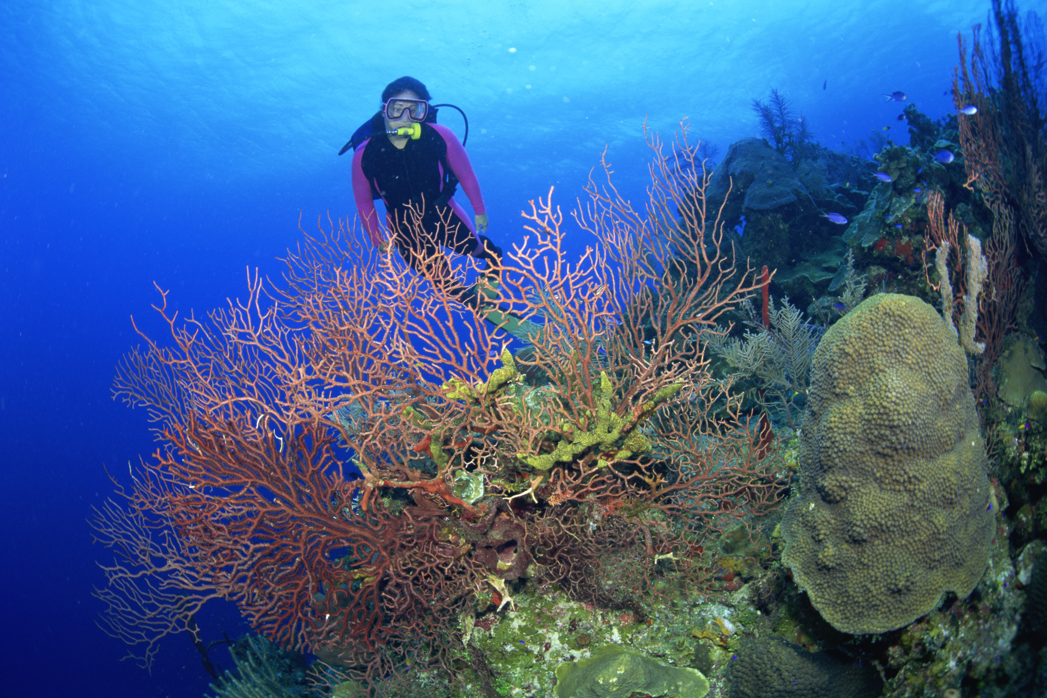 What Education Is Needed to Become a Marine Archaeologist  Career Trend