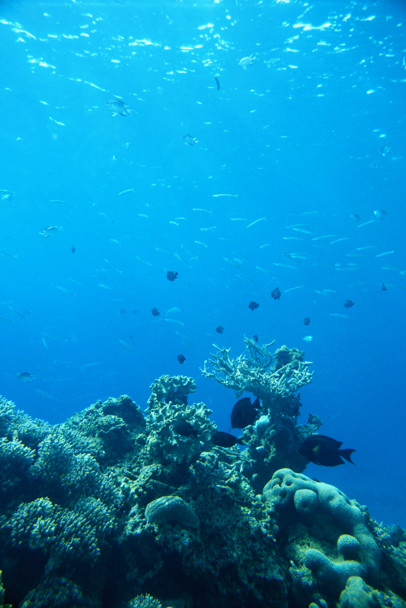 Where Does Photosynthesis Take Place In The Ocean