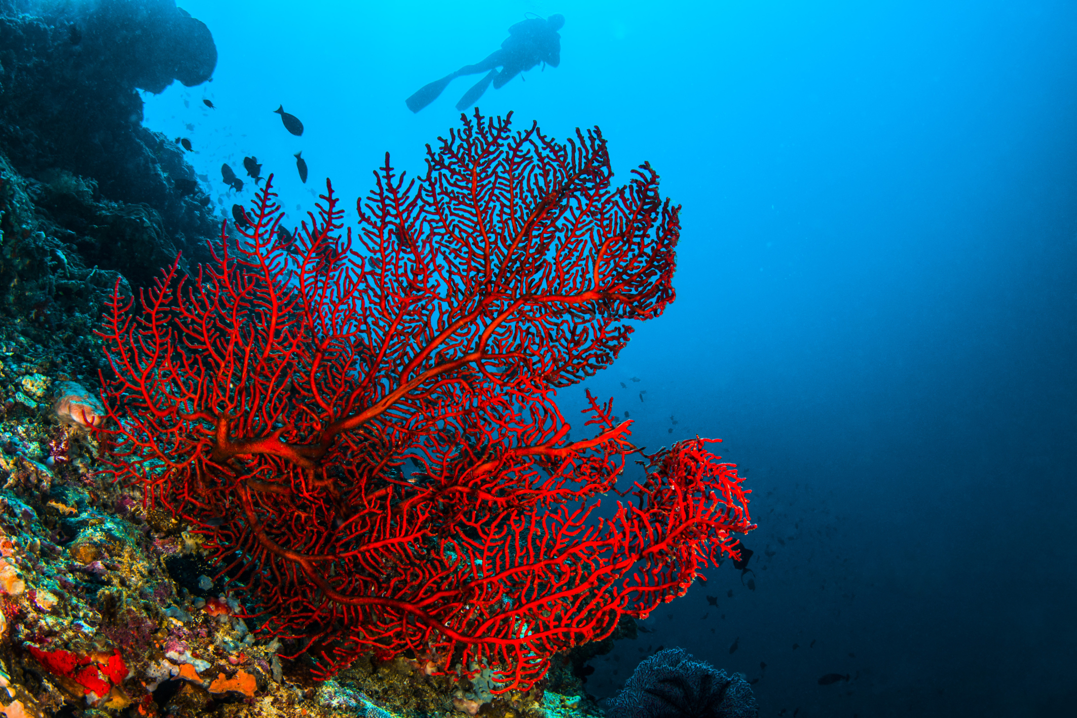 What Are the Healing Qualities of Red Coral  Healthfully