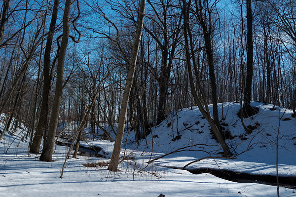 Tranquil wooded area and stream along the way on the Bruce Trail
