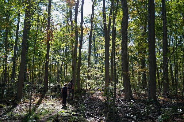Trekking through a well-lit forest.