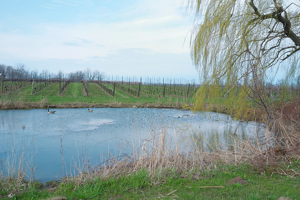 Almost like a lagoon but right next to a vinyard.  Very peaceful.