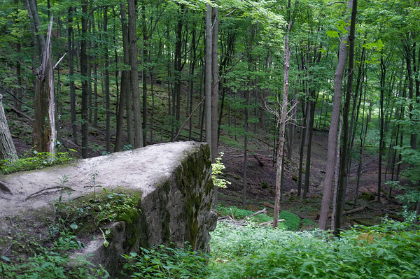 Enjoying a view of the forest along the escarpment.