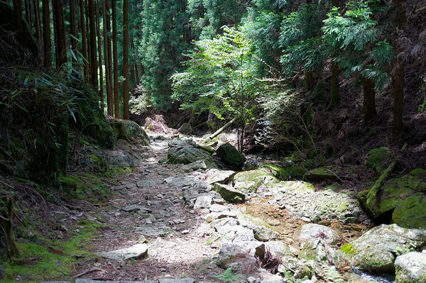 Quite a beautiful part of the trail after a lengthy descent with a small stream running along side.
