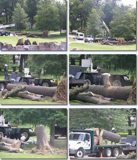 Graceland Grounds : Ripped Up Tree's ...