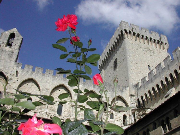 Des roses dans la cour du Palais des Papes à Avignon.