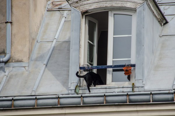 Cat climbing in an open rooftop window -- Menilmontant, Paris