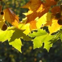 Couleurs d'automne à Lombreuil