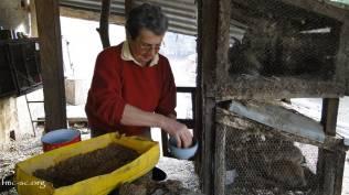 Sr Colette s'occupe des lapins