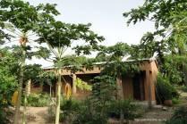 Le bâtiment du noviciat et les papayers