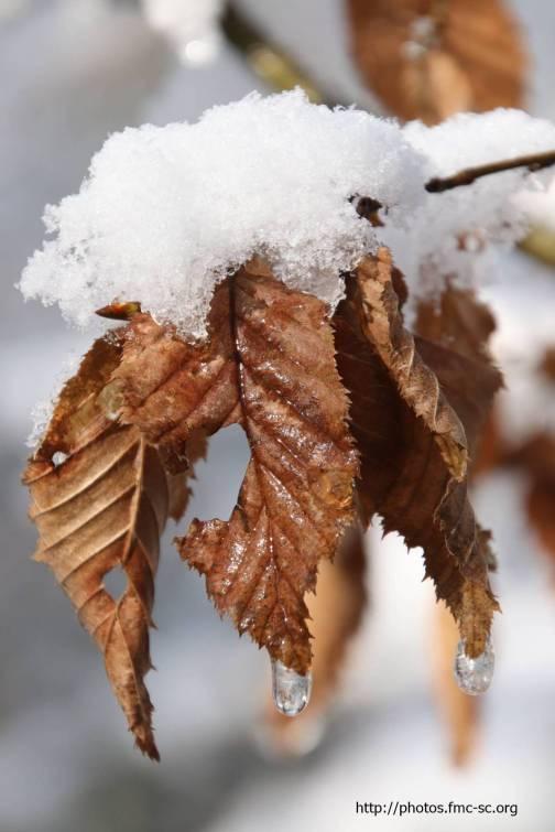 2018_02_lombreuil-neige (6)