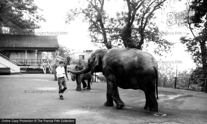 Photo Of Dudley Elephants At Dudley Zoo C1965