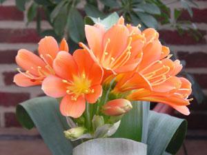10 plantes d interieur fleuries et