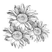 royalty free sunflower clip art
