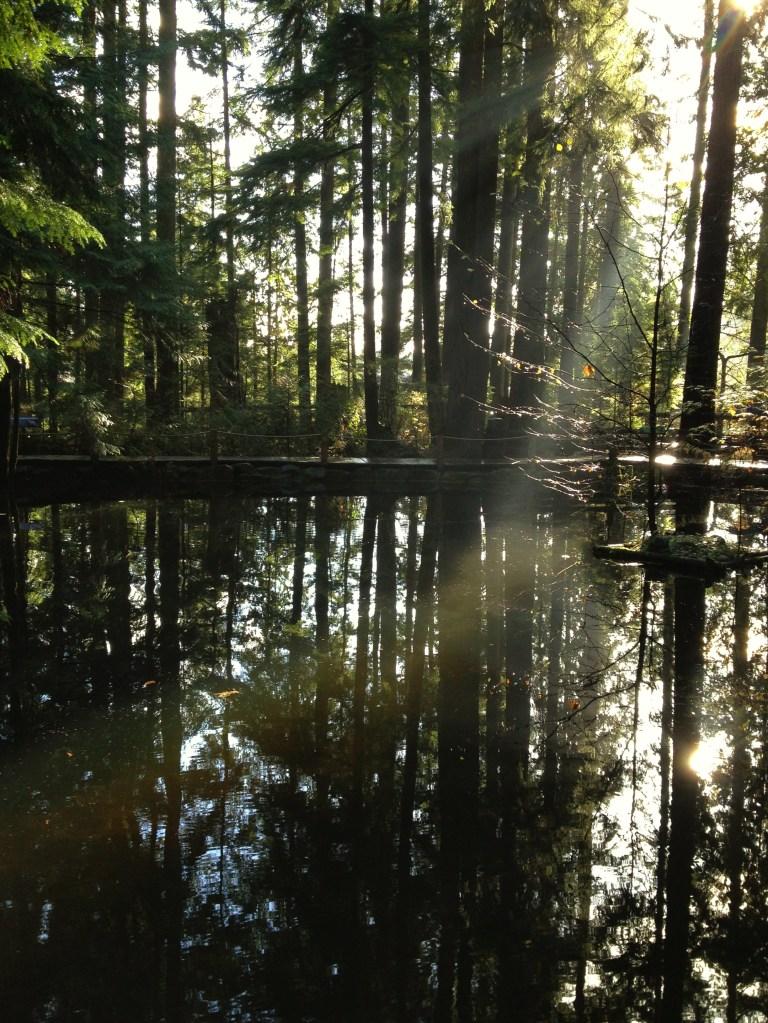 Capilano Suspension Bridge Park - Rain Forest and Water