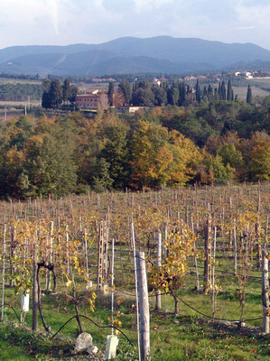 Tenuta di Nozzole house and vineyards