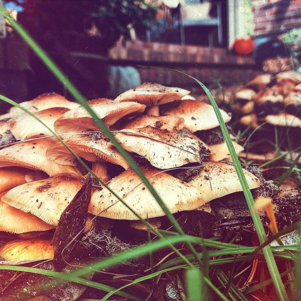 Fungi Find
