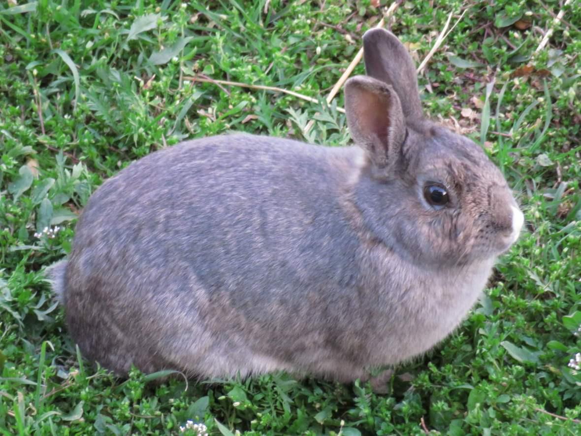 Rabbit on grassy background