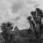 Cantona LanoraMueller-_MG_0275