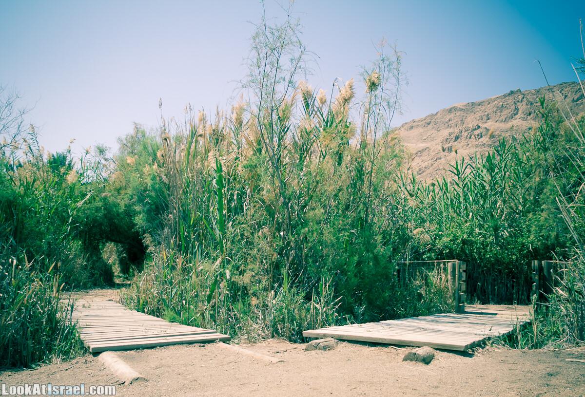 Эйнот Цуким | LookAtIsrael.com - Фото путешествия по Израилю