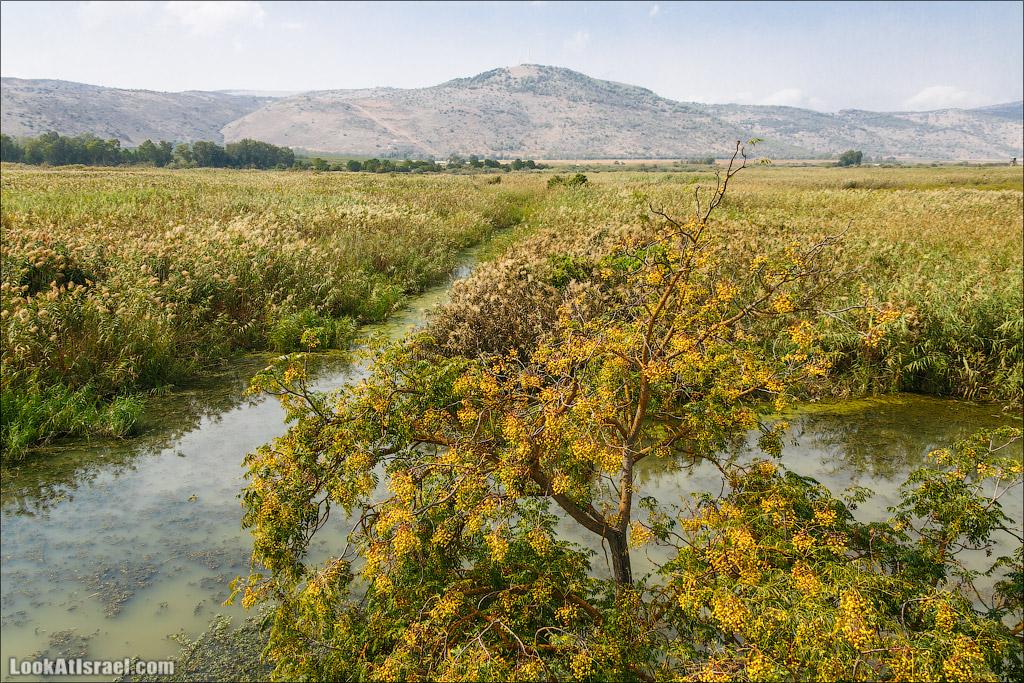 Заповедник Хула | LookAtIsrael.com - Фото путешествия по Израилю