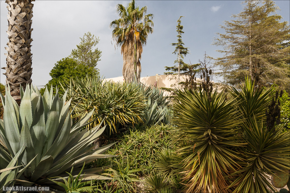Христианский кибуц Нес Амим   LookAtIsrael.com - Фото путешествия по Израилю